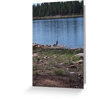 Willow Springs, Arizona Bird Cooling off in a Lake Greeting Card