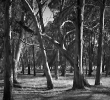 Scary Trees- Hahndorf by Ben Loveday
