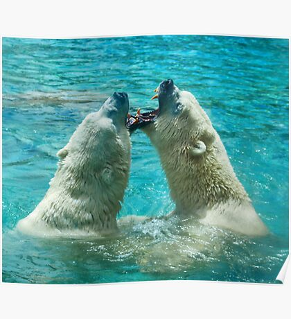Polar bear play Poster