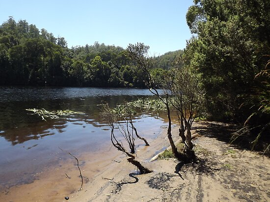 Pieman river, Tasmania by Esther's Art and Photography
