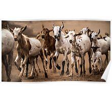 Goat migration Poster