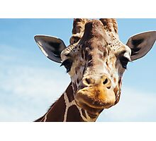 Cute Giraffe Closeup Photographic Print