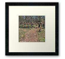 A Dry Path Framed Print