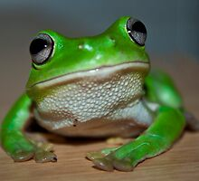 Mr Frogtastic by Cathie Trimble