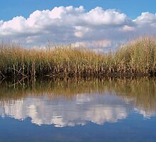 Sawgrass Water Sky and clouds 1 by William  Boyer