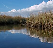 Sawgrass Water Sky and clouds 3 by William  Boyer