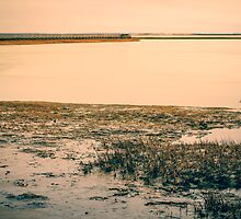 Gray's Beach, Salt Marsh, Cape Cod, Massachusetts by Elizabeth Thomas