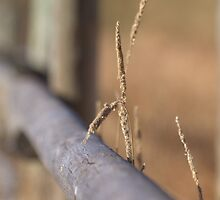 Grassy Fence by Kathi Arnell