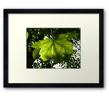 Natural Glow Framed Print
