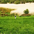 Summer Fields by colettelydon