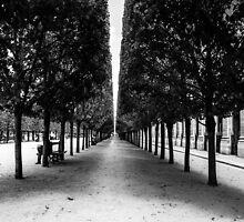 Avenue of Trees, Paris by MorganaPhoto