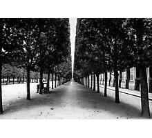 Avenue of Trees, Paris Photographic Print