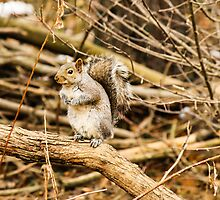 Relaxing Squirrel by Ty Helton