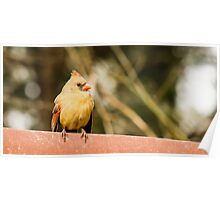 Female Northern Cardinal Poster