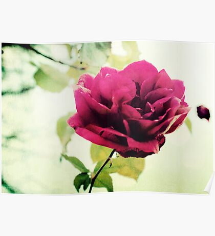 January Rose Poster