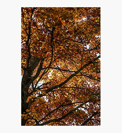 Changing Leaves Of Autumn Photographic Print