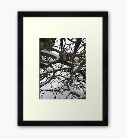 Through winter branches Framed Print