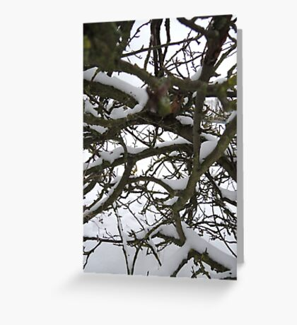 Through winter branches Greeting Card