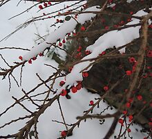 Red Berries by CreativeEm