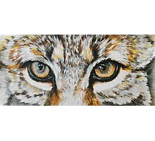 Eye-catching Bobcat Photographic Print