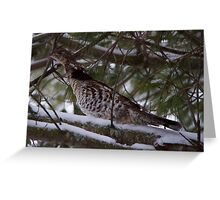 Grouse in situ Greeting Card