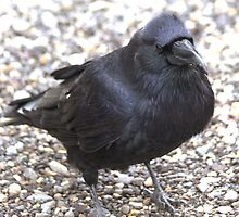 Raven by Kathi Huff