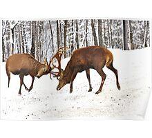 Territorial Combat (Wapitis Elks) Poster