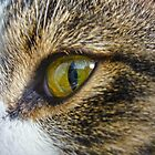 Green Eye Cat Eye by Susan S. Kline