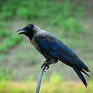 Crow by M-A-K