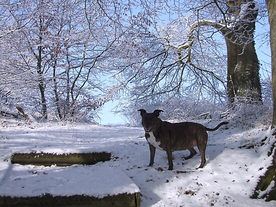 Dinefwr Castle the artist's dog in snow-01 by Pat - Pat Bullen-Whatling Gallery