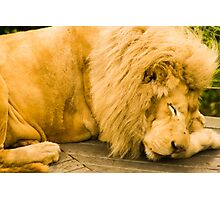 Sleeping Predator Photographic Print