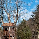 Blue skies and tree houses by Penny Rinker