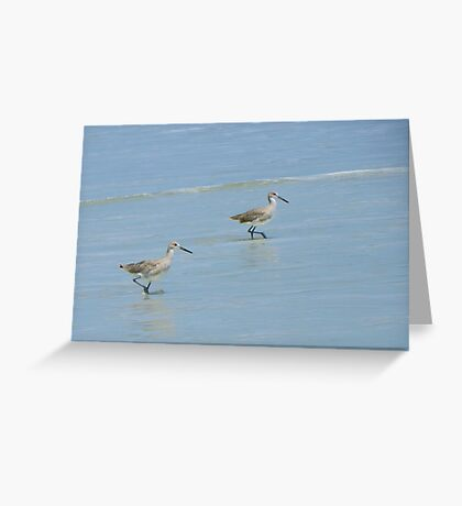 Sandpiper Races Greeting Card