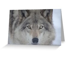 ..a charismatic Wolf... Greeting Card