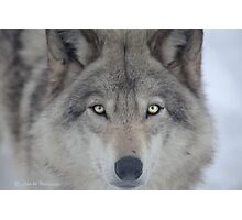 ..a charismatic Wolf... Photographic Print