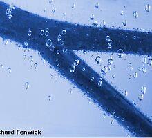 Micropropagation – Tomato by RichardFenwick