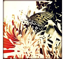 Beach Butterfly II Sunset Photographic Print