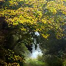 An Autumn Lane by John Dunbar