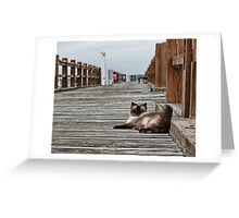 Cat Pier  Greeting Card