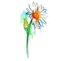 Daisy Watercolor Photographic Print