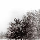 snow by edozollo