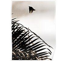 Blossom Bird Poster