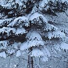 Frosted Winter Blues by lorilee