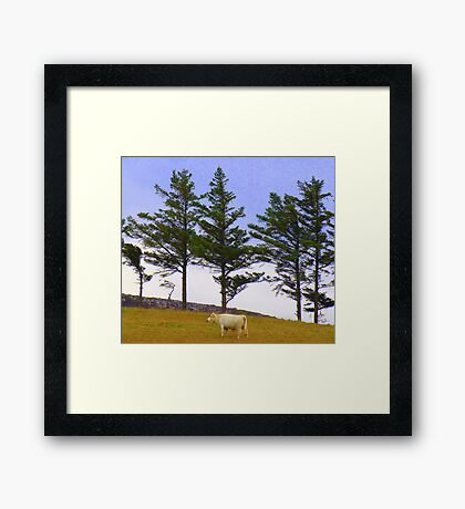 The Cow And The Lonesome Pines Framed Print