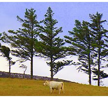 The Cow And The Lonesome Pines Photographic Print
