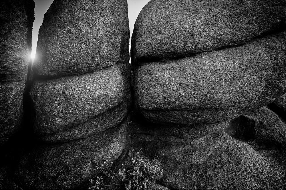 Rock Bots by Bob Larson