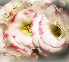 Lisianthus (Prairie Rose) - Always lovely by EdsMum