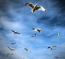 Sea Gulls by Tracy Engle