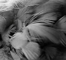 ©NS On My Wings In Mono by OmarHernandez