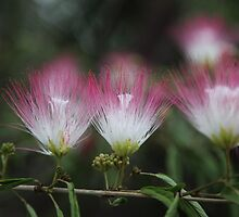 Delicate Blooms by Saraswati-she